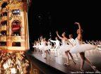 Harlequin Liberty Opera de Paris